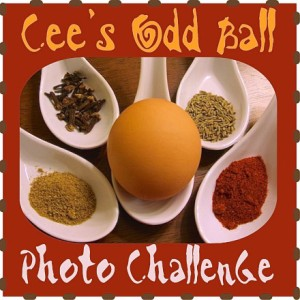 cee's photography odd ball photo challenge