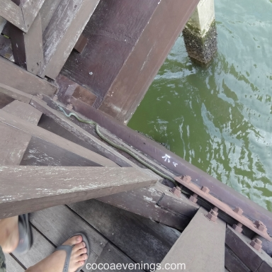 look down into the water under the bridge at sungei blush wetland reserve
