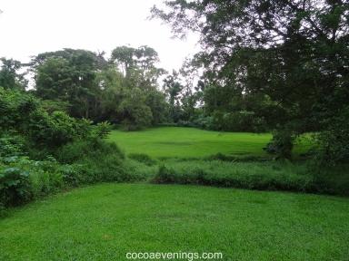 grass at bukit timah secondary rainforest