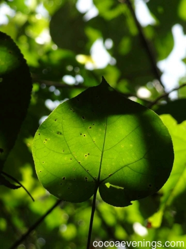 green leaf close up heart shape