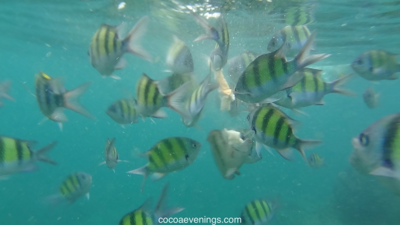fish-and-bread-andaman-sea-DSC01925